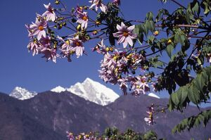 Flowers at Lukla
