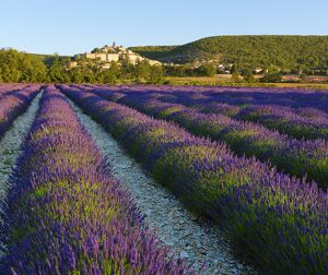 France, Provence, Banon, lavender to foreground