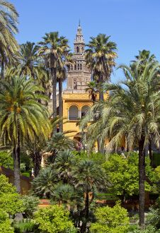 Giralda tower seen from Alcazar Gardens, Seville, Spain