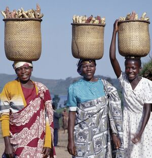 A group of cheerful women carry sweet potatoes to market