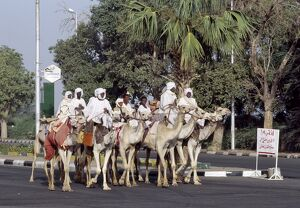 A group of men ride their camels up a main street in Khartoum