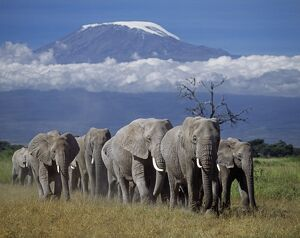 A herd of elephants
