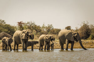 new/20191004 awl 7/herd elephants waterhole namibia africa