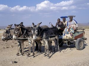 An Herero man and two women ride home in a donkey cart