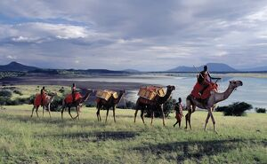 Maasai men lead a camel caravan laden with equipment