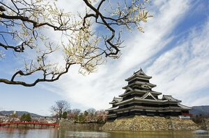 Matsumoto Castle and moat spring cherry tree blossom
