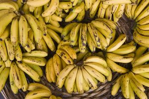 Mauritius, Port Louis, Central Market, bananas
