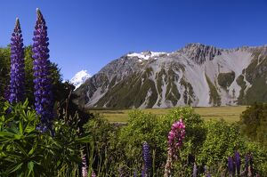 New Zealand, South Island, Mackenzie Country