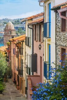 Old town street, Collioure, Languedoc-Roussillon, France