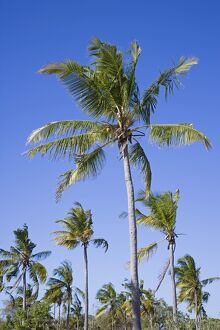 Palm trees on Ibo Island