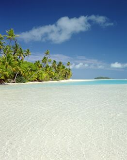 Palm Trees & Tropical Beach, Aitutaki Island, Cook Islands, Polynesia
