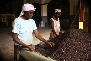 Two Sao Tomense women sort through cocoa beans at the