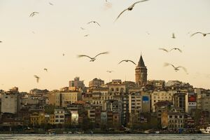 Seagulls flock above the Golden Horn, Istanbul