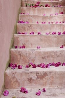 Spring Flowers on Staircase, Hania, Hania Province, Crete, Greece