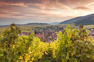 Sunset over the vineyards surrounding Riquewihr, Alsace, France