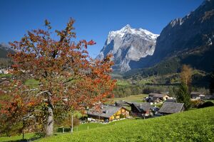 Traditional Houses, Wetterhorn & Grindelwald, Berner Oberland, Switzerland