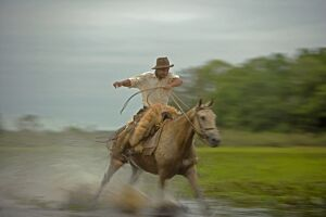 Traditional Pantanal Cowboys