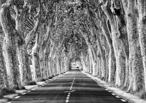 A tree-lined road, Languedoc-Roussillon, France