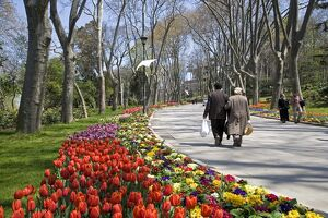 Tulips bloom in Gulhane Park, Istanbul