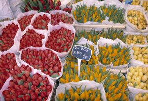 Tulips at Flower market