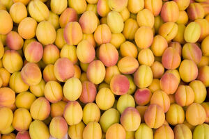 new/20191004 jai 6/turkey eastern turkey malatya bazaar apricots