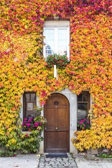 typical house covered vines hautvilliers marne