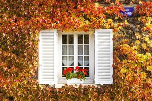 typical window surrounded vine autumn champagne