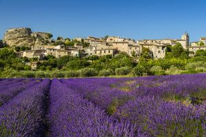 View of village of Saignon with field of lavander in bloom, Provence, France