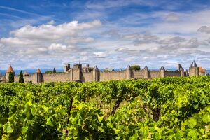Vineyard with the medieval fortified citadel behind, Carcassonne, Languedoc-Roussillon