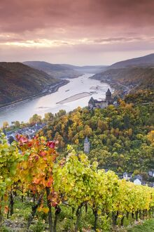 vineyards bacharach rhineland palatinate germany