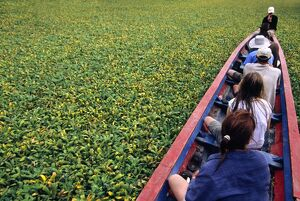 Water hyacinth makes for slow progress cruising up