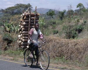 Wood sellers carry heavy loads of wood on their bicycles