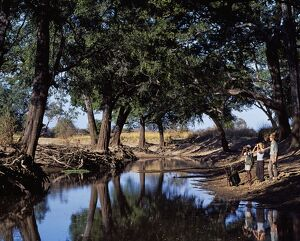 Zambia, South Luangwa National Park, Shenton Safaris