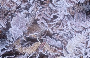 Frost on a forest floor in the Lake District, UK