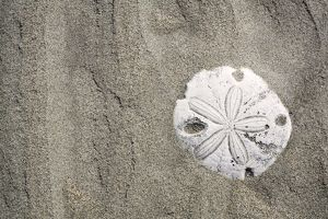 Patterns in the sand dunes (with sand dollar) of Isla Magdalena on the Pacific side