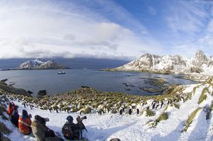 Tourists photographing Macaroni Penguins Eudyptes chrysolophus at colony in Cooper