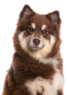 <b>Finnish Lapphund</b><br>Selection of 17 items