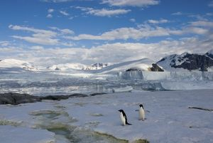 adelie penguins, Pygoscelis Adeliae, along the western Antarctic Peninsula, Antarctica