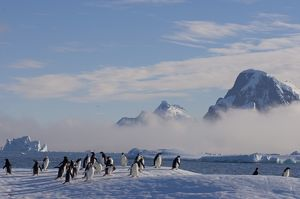 adelie penguins, Pygoscelis Adeliae, on glacial ice along the western Antarctic Peninsula