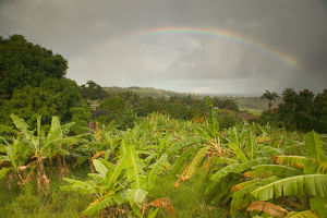 BARBADOS, St. Joseph Parish, Grey Clouds, Rainbow, Tropical Vegetation