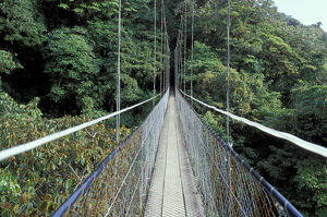 Central America, Costa Rica, Monteverde Cloud Forest Suspension Bridge along Sky Walk