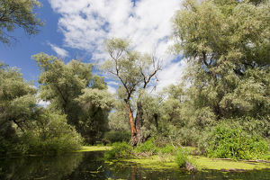 channels danube delta romania big willows alder