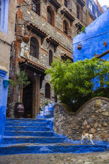 architecture/chefchaouen morocco cat blue steps medina