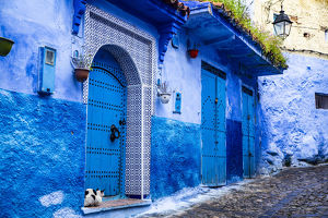 architecture/chefchaouen morocco cat blue tiled door