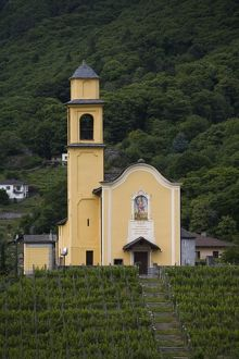 Chiesa San Sebastiano, vineyard, Bellinzona, Ticino, Switzerland