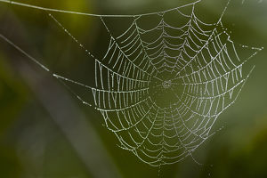 usa/florida/dew hangs spider web green focus background photograph