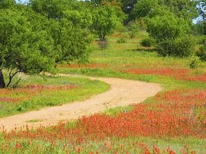 places/dirt road lined indian paintbrush old spanish