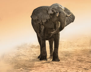elephant in dust and sunglow