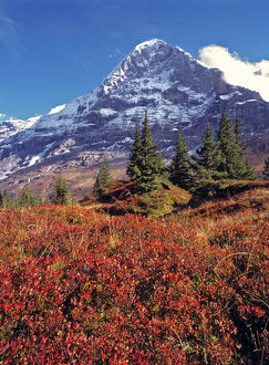 Europe, Switzerland, Eiger. Vibrant red foliage colors the trail below the Eiger