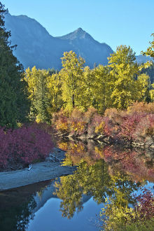 landscape/fall foliage white river area wenatchee national forest